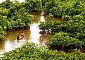 mangrove_1
