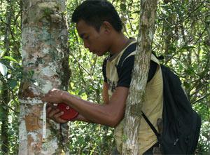 monitoring hutan