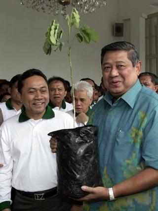 pohon trembesi SBY