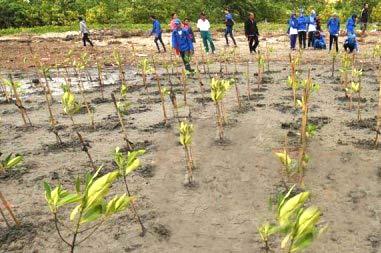 tanam-mangrove.jpeg